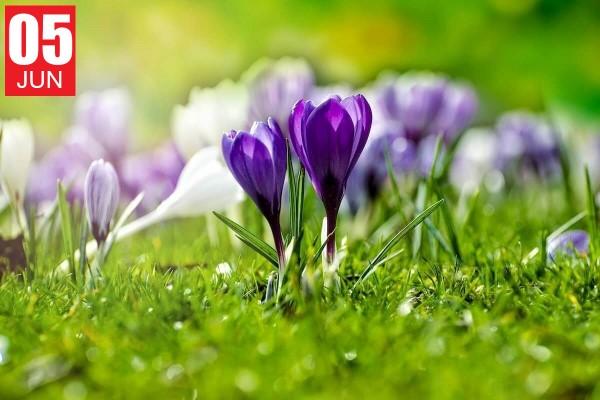 Retiro Primavera